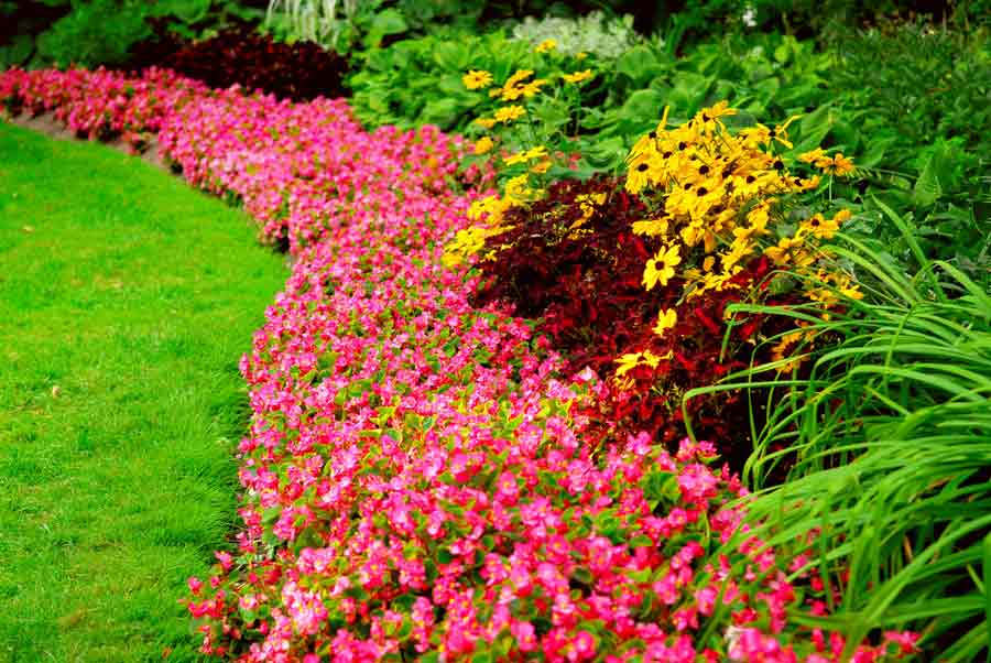 Quality Landscape Maintenance Welcome to Quality Landscape